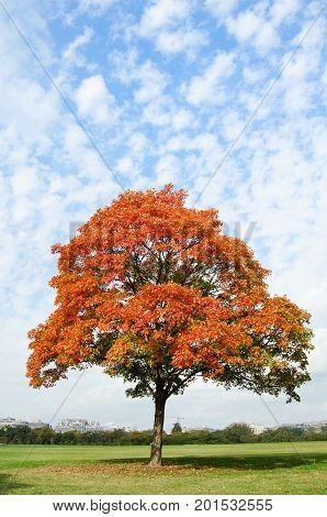 Autumn Idyllic City Getaway Spot