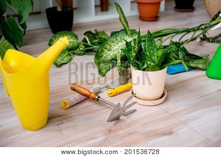 Gardening tools and essentials on a wooden floor