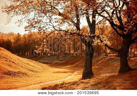 Autumn sunny landscape scene. Autumn nature of city park in sunny autumn weather - beautiful autumn landscape with golden autumn trees and orange fallen autumn leaves. Sunny autumn landscape view