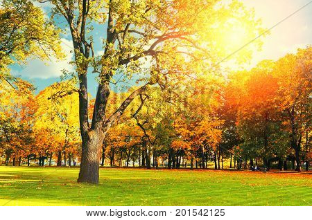 Autumn landscape background in vintage tones- sunny autumn landscape scene of autumn park in sunshine. Golden autumn trees in the autumn park in sunny weather. Sunny autumn landscape view