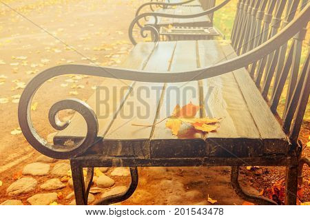 Autumn landscape with autumn leaves. Yellowed dry autumn leaf on the wooden lonely bench in the autumn park in foggy weather. Autumn leaves landscape. Closeup of autumn leaves on the bench