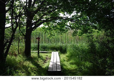 Backlit wooden footbridge in a lush greenery at the swedish island Oland