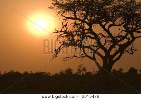 Sunrise In Moremi Game Reserve