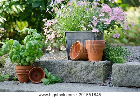 Cottage garden - beautiful flowers in pots with table and chair on the background