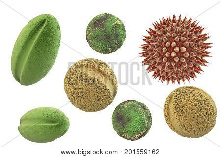 Pollen grains from different plants, 3D illustration. They are factors causing hay fever and allergic rhinitis poster