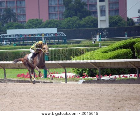 Race horse ahead by several lengths driving down the home stretch at fujll gallop. poster