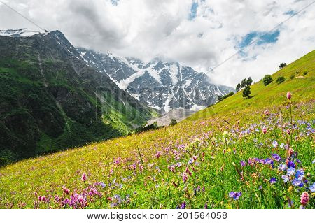 Flowering alpine meadows in the Caucasus against the background of rocks and Caucasus Mountains