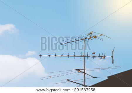 Doves bird resting at antenna with sunlight