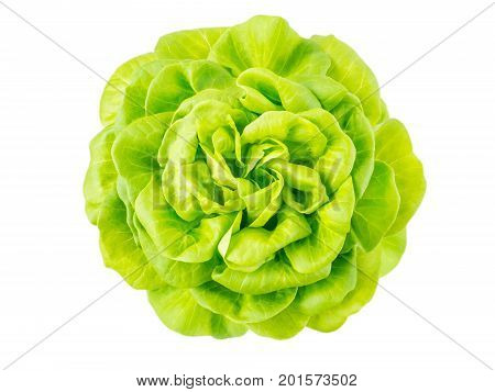 Lettuce salad rosette head top view isolated on white
