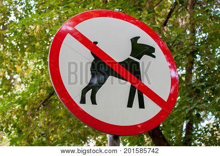 City black-red-white round sign of dog walking prohibited