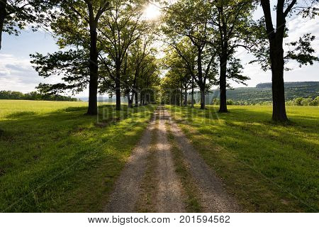Road to Mohonk Mountain House from the Testimonial Gateway in New Paltz New York. Tree lined trail through a green pasture at sunset.