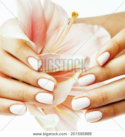 beauty delicate hands with manicure holding flower lily close up isolated on white background, woman perfect shape