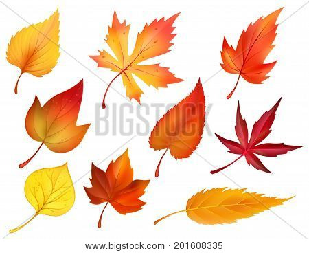 Autumn leaves or fall foliage icons. Vector isolated set of maple, oak or birch and rowan tree leaf. Falling poplar, beech or elm and aspen autumn leaves for seasonal holiday greeting card design