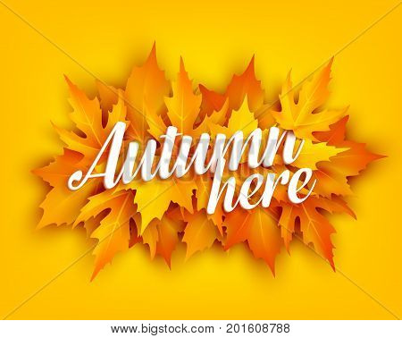 Autumn leaf poster of orange and yellow maple foliage. Fall nature season banner with bunch of september leaves for autumn holiday greeting card and fall fest invitation template design