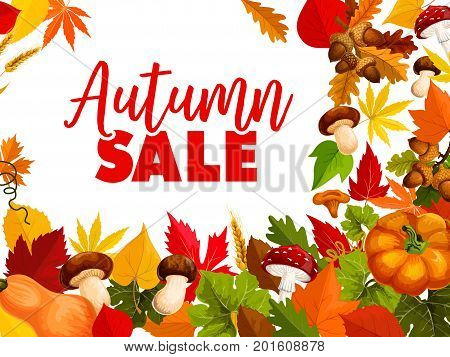 Autumn sale, fall season discount offer poster. September leaf, autumn harvest pumpkin vegetable, orange foliage of maple and chestnut, amanita and cep mushroom, acorn and wheat for retail design