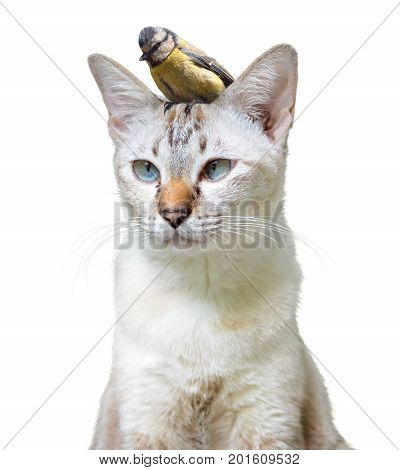 Unusual pet friendship between a cute cat and little bird, isolated on a white background