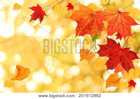 Beautiful Autumn themed background. Different multicolored dry maple leaves falling down with windy movement, fall foliage season collage.