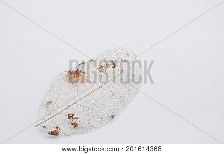 dry leaf decompose structure on white background