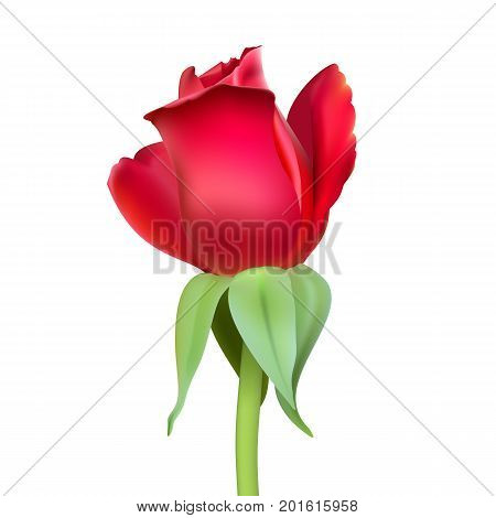 Realistic rose Bud with stem and leaves. Closeup, isolated on a white background the flower Bud of the rose. The symbol of romance and love, a template for a greeting card, 3D illustration.