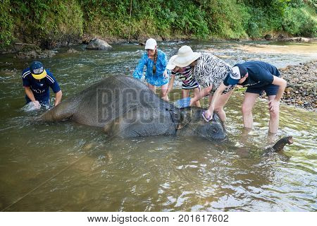 Tourists Bath Small Elephant In A Tropical River.