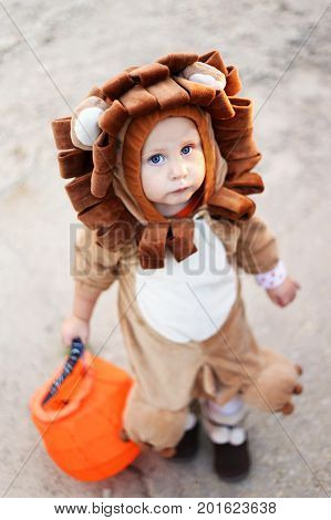 A cute baby child is holding a candy bag while dressed up in a lion costume to trick-or-treat on Halloween.