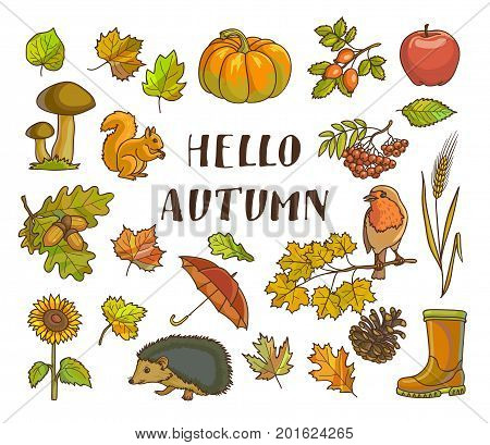 Hello autumn poster with isolated thematic vector illustrations on white background. Yellow leaves, ripe pumpkin, grown mushrooms, waterproof umbrella, rubber boots, bird on branch and small animals.