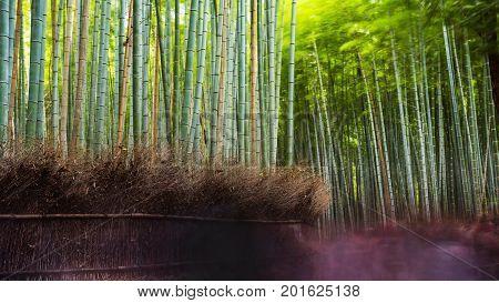 Arashiyma Bamboo Grove, Kyoto