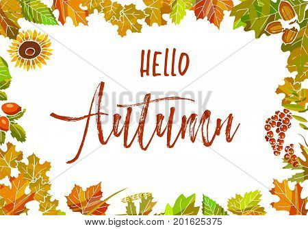 Hello autumn poster with colorful leaves and seasonal plants as frame that surrounds sign in italic font isolated vector illustration on white background. Bright banner that tells about fall arrival.
