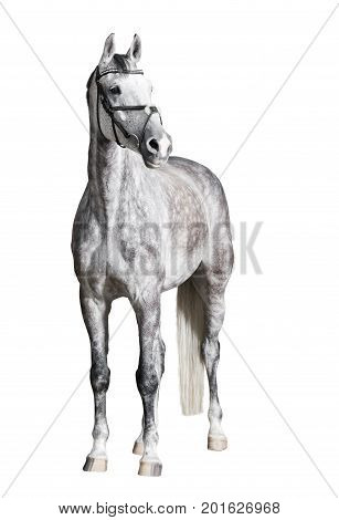 White Riding Horse Isolated