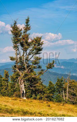 Strange Tree On A Hillside