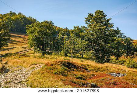 Road Through Beech Forest On A Hillside