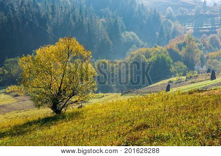 Tree With Yellow Foliage On Hills In Countryside