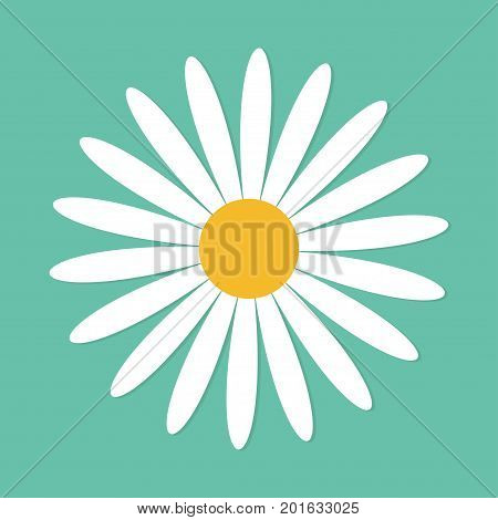 White daisy chamomile. Cute round flower plant collection. Love card. Camomile icon Growing concept. Flat design. Green background. Isolated. Vector illustration