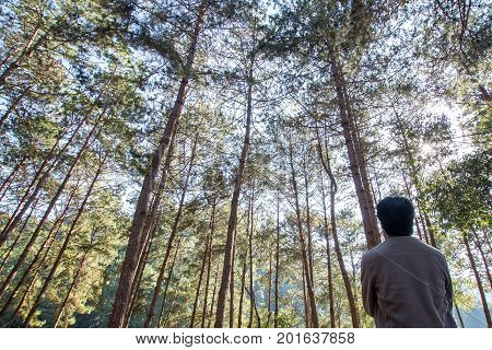 Single or alone man traveler stand and looking up to the pine tree with sunlight sunbeams or sunrays.