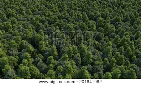 3d rendering ultra high quality image. Texture of forest in an aerial view. Beautiful panoramic image over the tops of pine forest. From above. The picture is made as if using a helicopter.