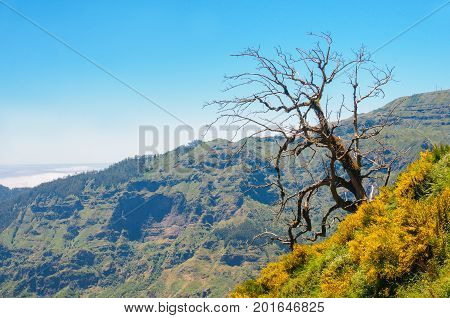 Lonely tree. Mountain landscape. View of mountains on the route Encumeada - Boca De Corrida, Madeira Island, Portugal, Europe.