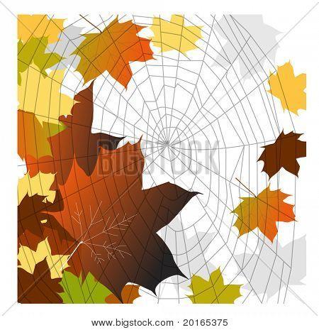 fall leaves spiderweb