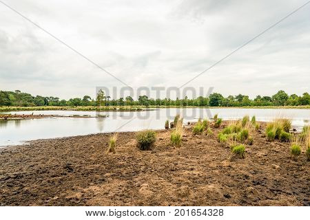 Dried bank of a fen in a Dutch nature reserve at the border with Belgium after a long dry period.