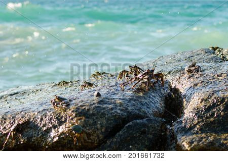 Crabs On A Rock. Crabs Have A Sunbath On A Rock Near The Sea