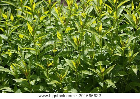 Fresh green plants on a flower bed