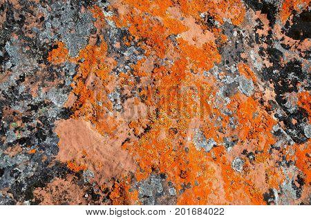 Multicolored mosses, fungi and lichens, growing on huge stone slabs, create a bizarre camouflage pattern. Kola Peninsula, Tersky coast, White Sea