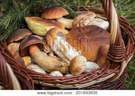 Detail Of Wicker Basket With Edible Mushrooms