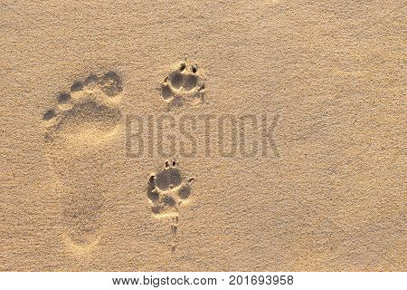 Human Footprint Beside Dog Footprint On The Tropical Beach