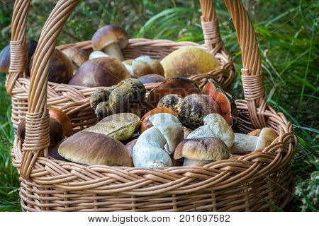 Close-up Shot Of Wicker Basket With Mushrooms