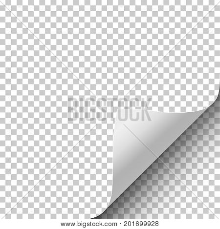 Sheet of transparent paper with curled corner and soft shadow. Element with space for text, ad and other aims. Template paper design. Vector illustration.