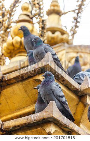 Pigeons on the golden stupa of the Swayambunath Temple Kathmandu Nepal
