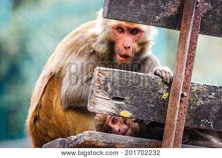 Monkeys At The Swayambunath Temple, Kathmandu, Nepal