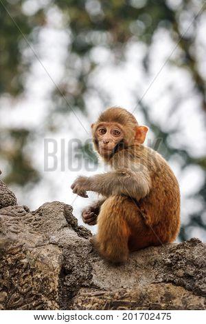 Baby Monkey At The Swayambunath Temple, Kathmandu, Nepal