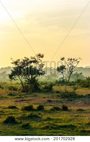 Sunset In The Jungle, Chitwan National Park, Nepal