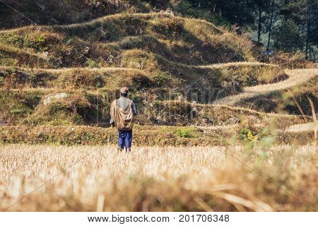 Farmer walking in a rice field on the Annapurna Base Camp Trek